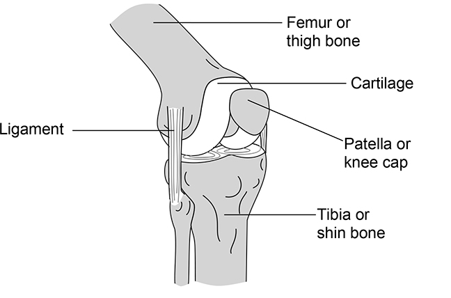 knee and femur and tibia